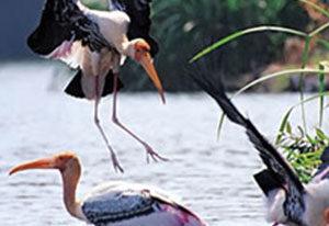Somanthpura_Shimsha_Ranganathittu-_Bird-_Sanctuary