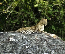 bandipur_safari_lodge