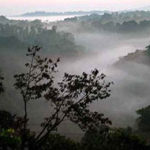 coorg_img1