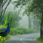 wayanad_package